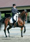 Dressage Trainer Todd Flettrich Departs for 2009 European Summer Tour